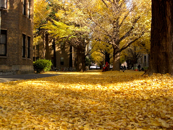 秋かあ〜。こっちは夏だあ〜!